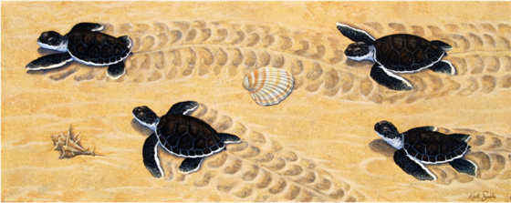 Advancing Turtle Hatchlings