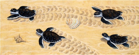 Advancing Turtle Hatchlings by Keith Siddle at the Saffron Walden Gallery