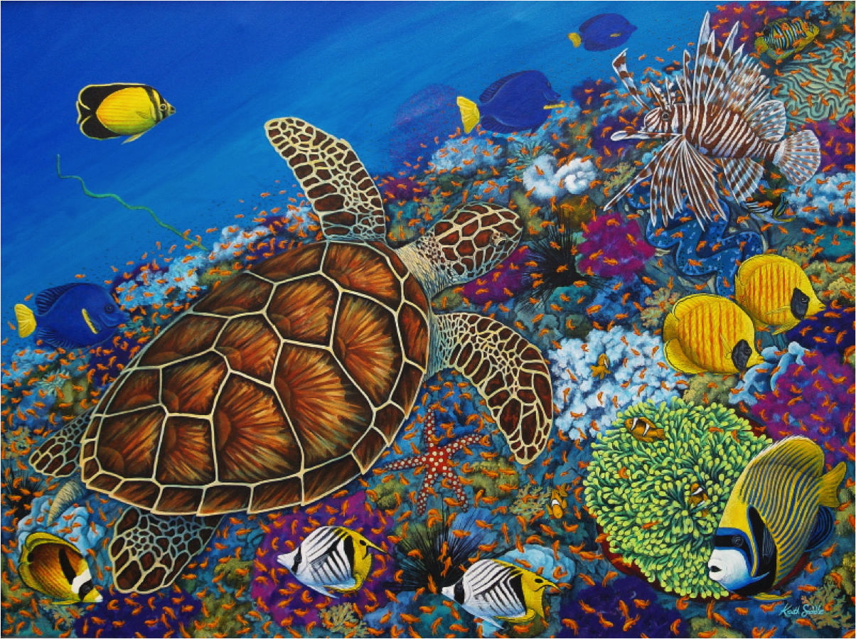 Turtle and the Reef