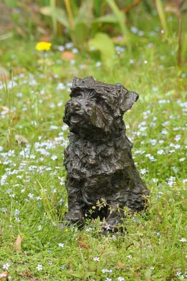 Bramble, Norfolk Terrier by Rosemary Cook at the Saffron Walden Gallery