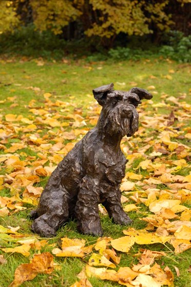 Smudge, Schnauzer by Rosemary Cook at the Saffron Walden Gallery