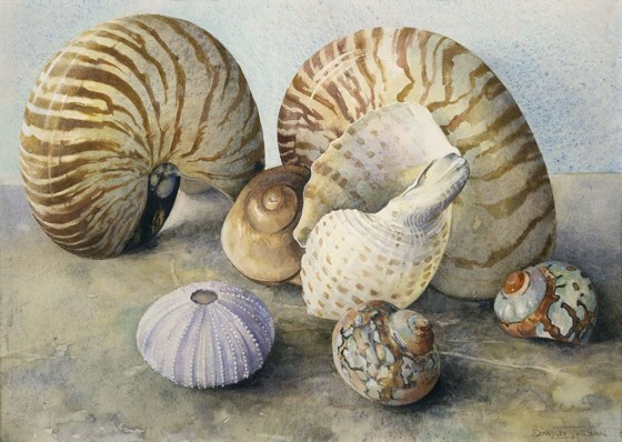 Mauve Shell by Tessa Shedley Jordan at the Saffron Walden Gallery