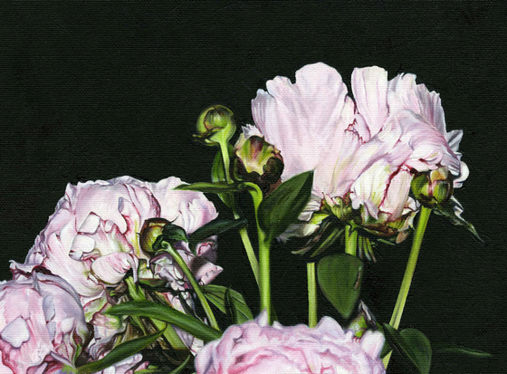 Peonies II by  at the Saffron Walden Gallery