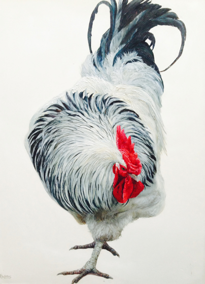 Light Sussex Cockerel by Katie Wilkins at the Saffron Walden Gallery