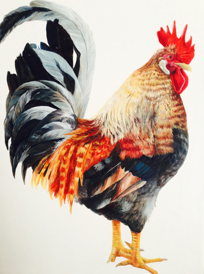 The Cockerel by Katie Wilkins at the Saffron Walden Gallery