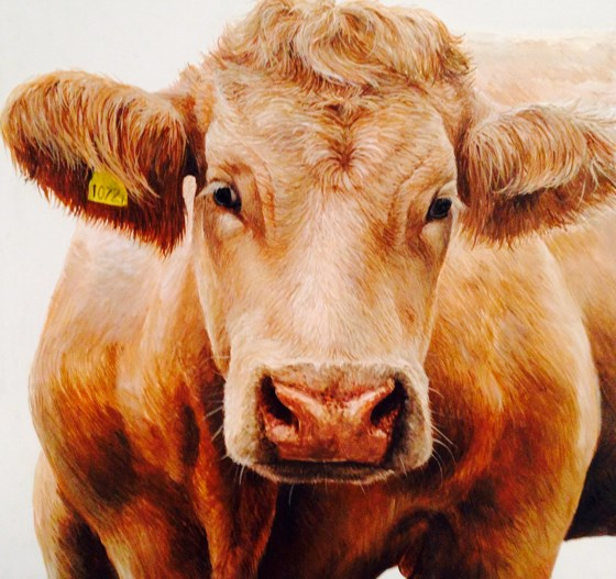 Cow Portrait by Katie Wilkins at the Saffron Walden Gallery