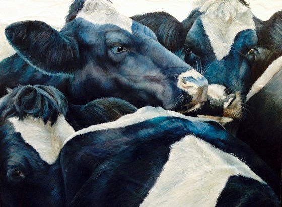 Friesian Scrum by Katie Wilkins at the Saffron Walden Gallery