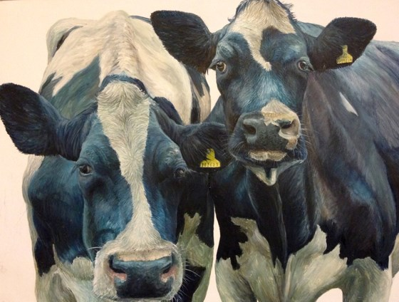 The Two Friesian Cows by Katie Wilkins at the Saffron Walden Gallery
