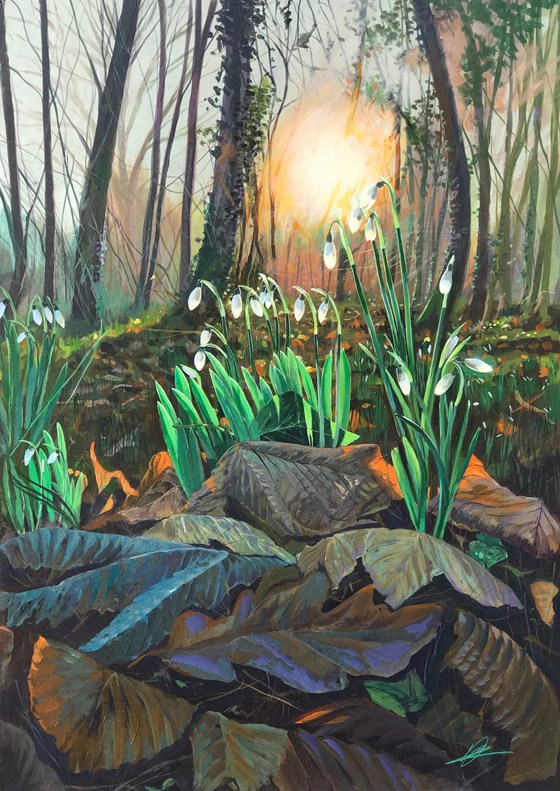Into the Woods Snowdrops by Debbie Baxter at the Saffron Walden Gallery