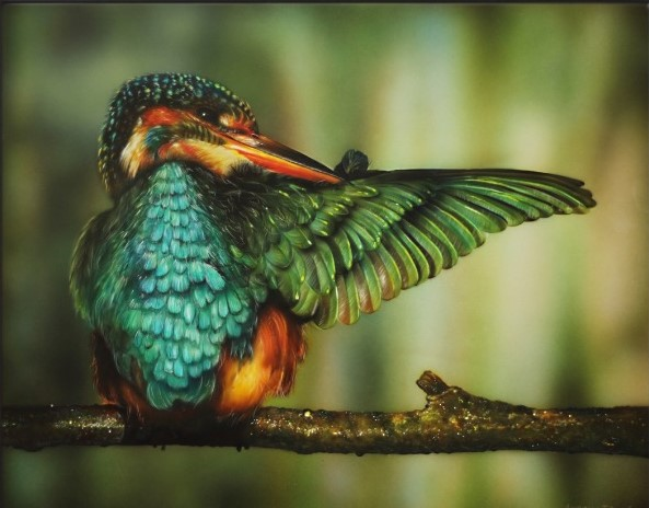 Kingfisher's Jewels