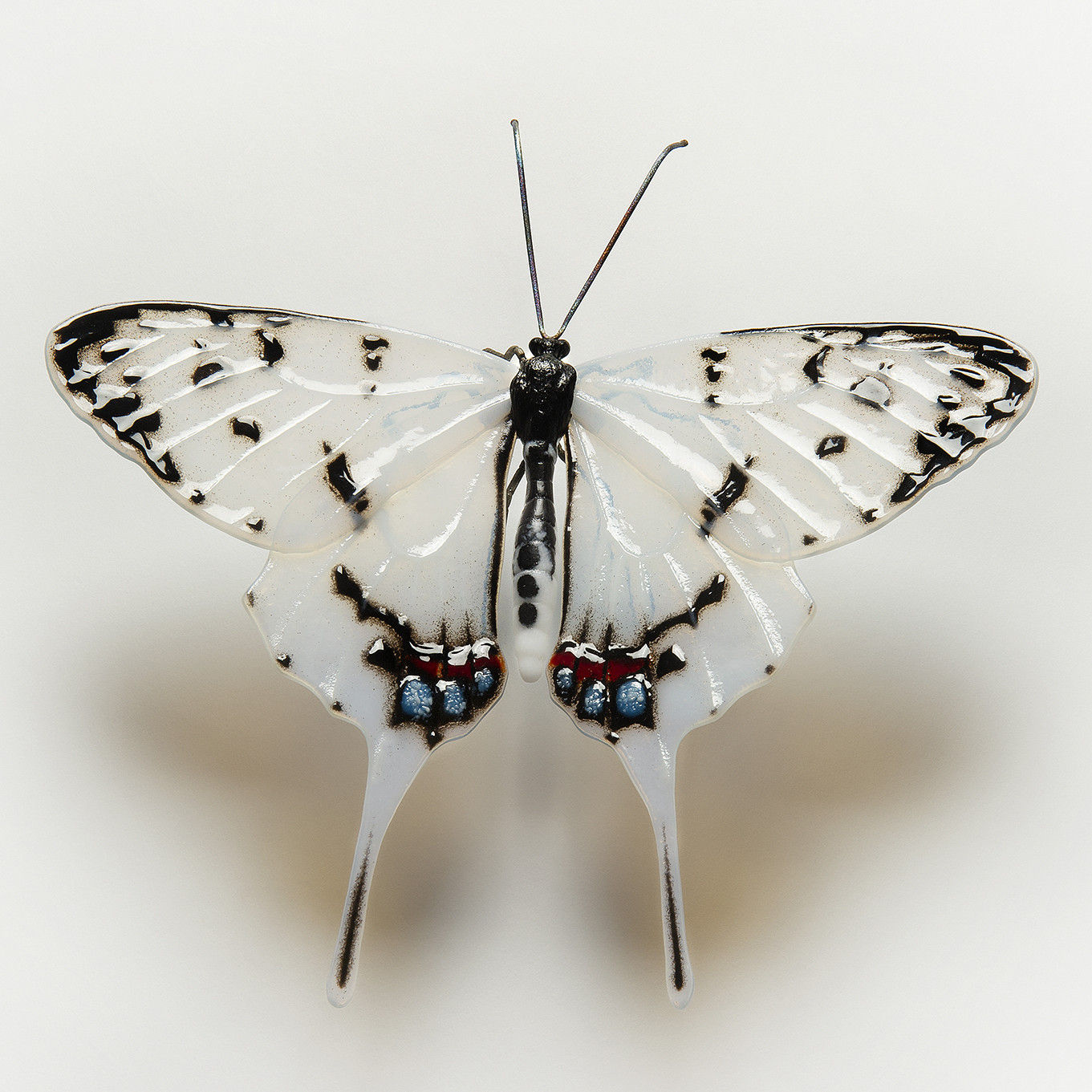 Dragon Swallowtail Butterfly by Laura Hart at the Saffron Walden Gallery