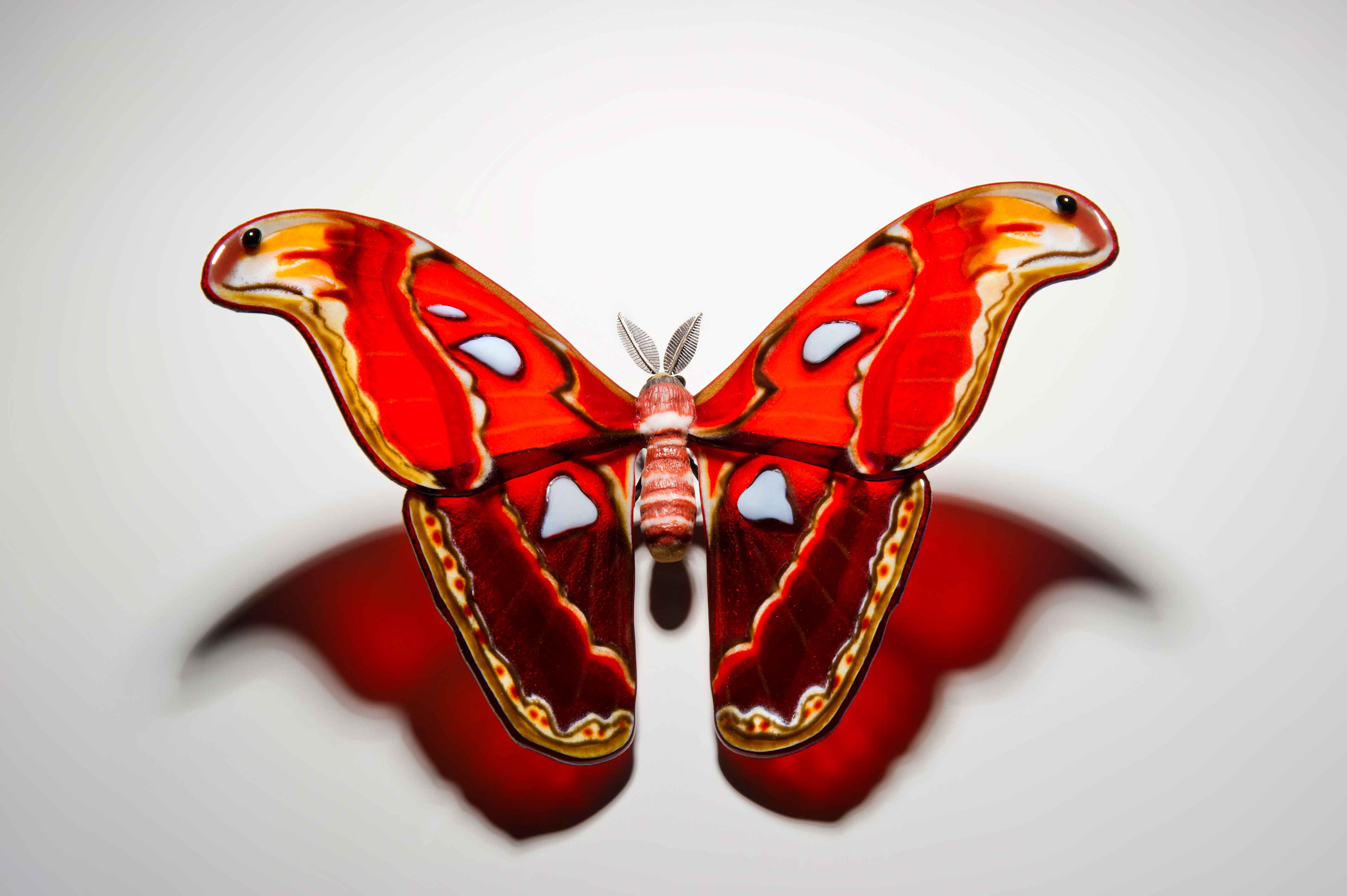 Atlas Moth by Laura Hart at the Saffron Walden Gallery