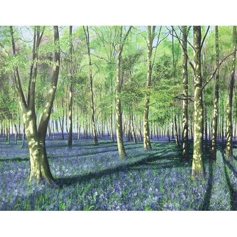 Bluebell Howe Wood by Debbie Baxter at the Saffron Walden Gallery