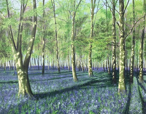 Bluebell Howe Wood