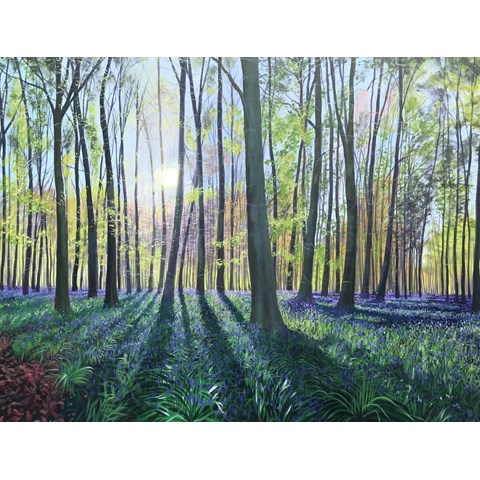 Morning Bluebells by Debbie Baxter at the Saffron Walden Gallery